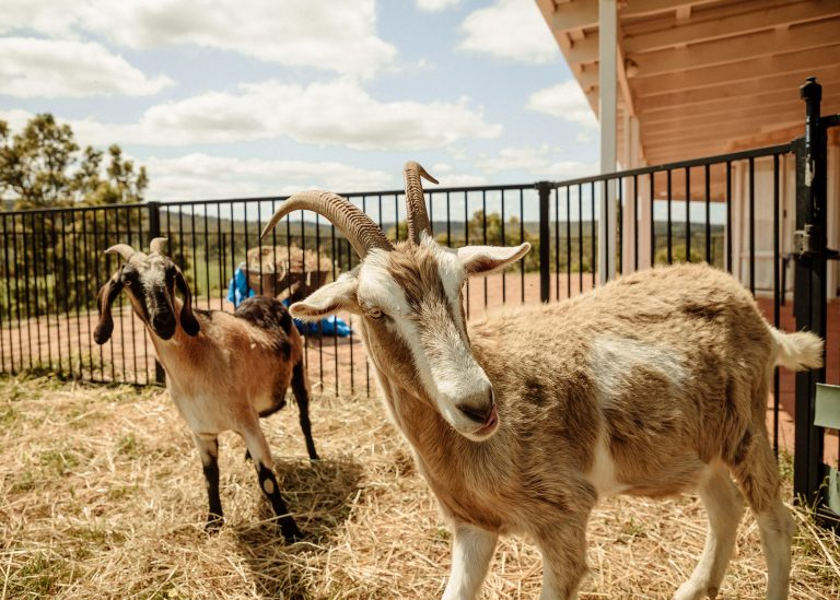 Lucifer & Peppa are Looking for a New Home Together